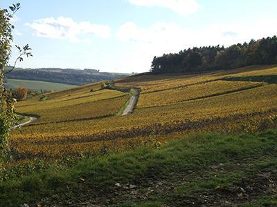 Vignes en Automne Champagne Michel Hoerter