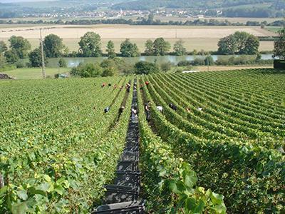 Vendanges Champagne Michel Hoerter